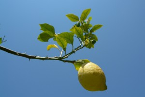 lemon-1326037-638x425
